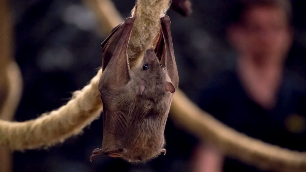 10 eco-volunteering holidays in the UK and Europe; bat sanctuary