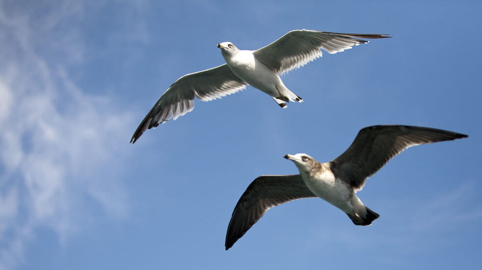 10 eco-volunteering holidays in the UK and Europe; seabirds