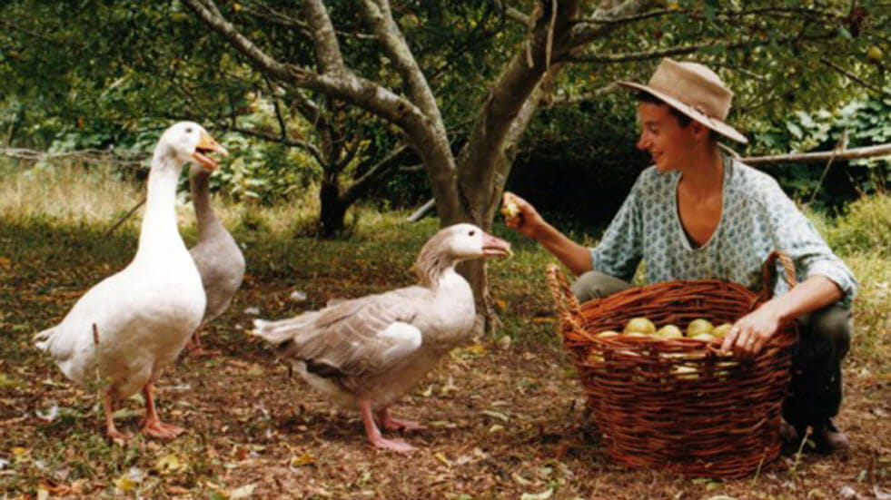 10 eco-volunteering holidays in the UK and Europe; feeding geese