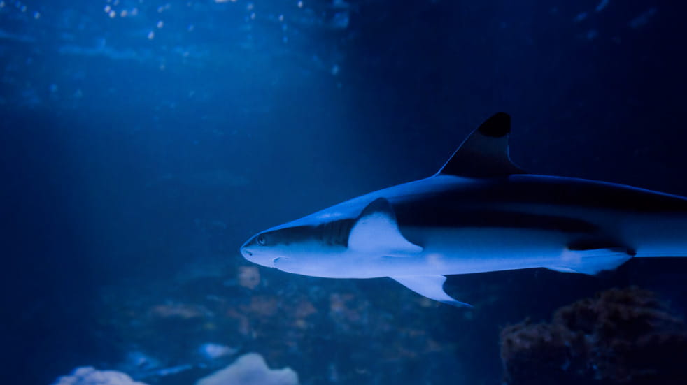 Visit the Blue Reef Aquarium Portsmouth
