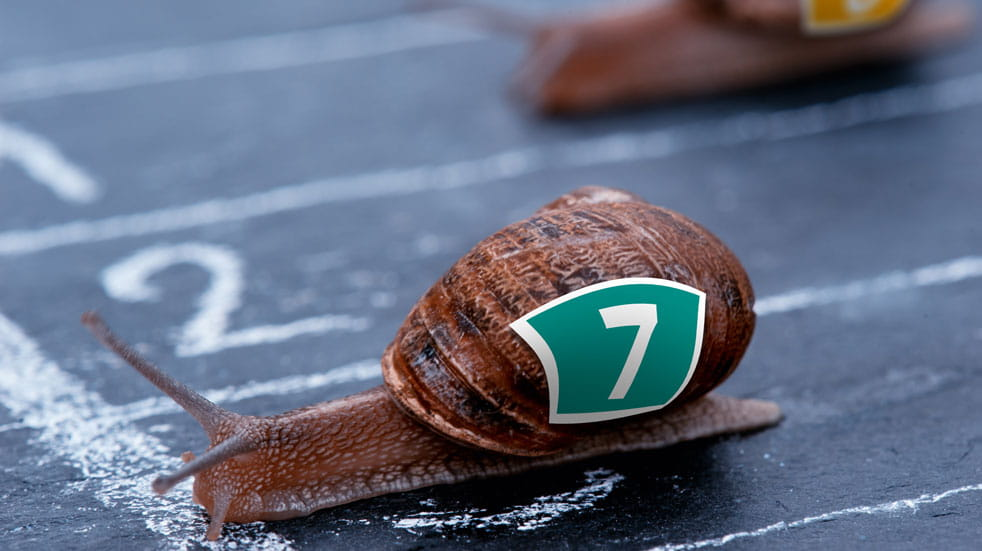 Yes, there is a world snail racing championship...