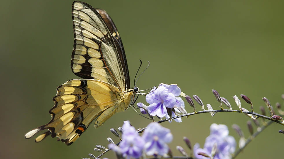25 free things June 2020; butterfly