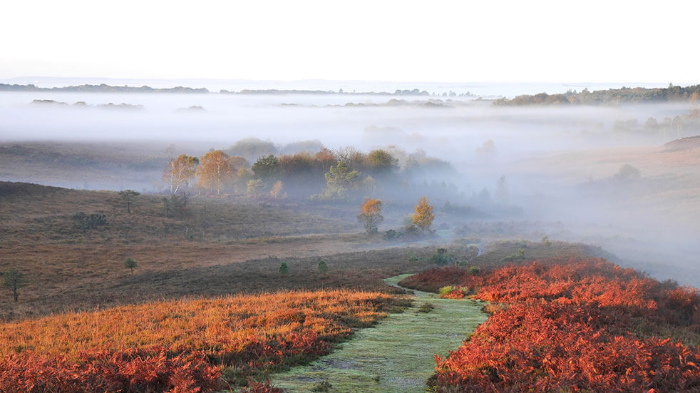 25 free things to do in October - GettyImages- New Forest