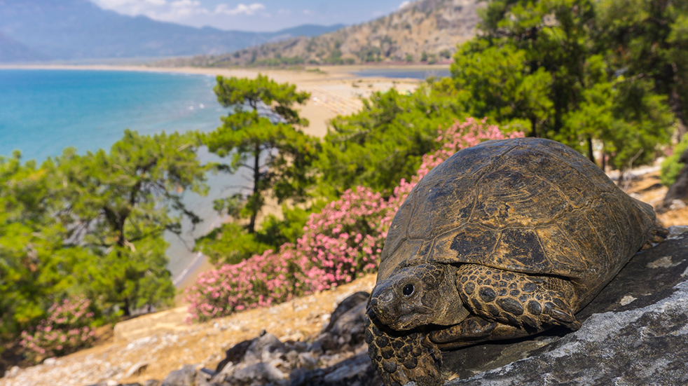 Winter sun holidays Iztuzu Beach Turkey turtles