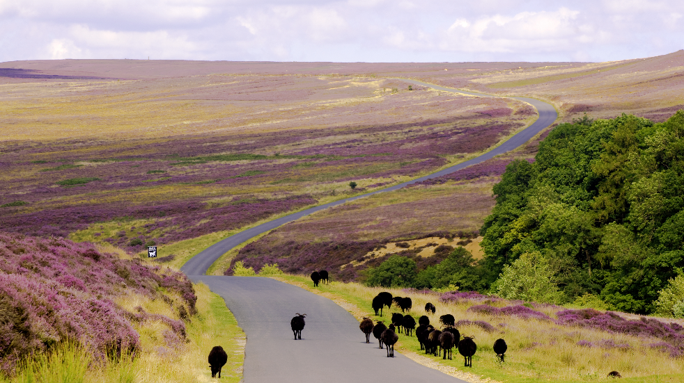 Things to do on north york moors