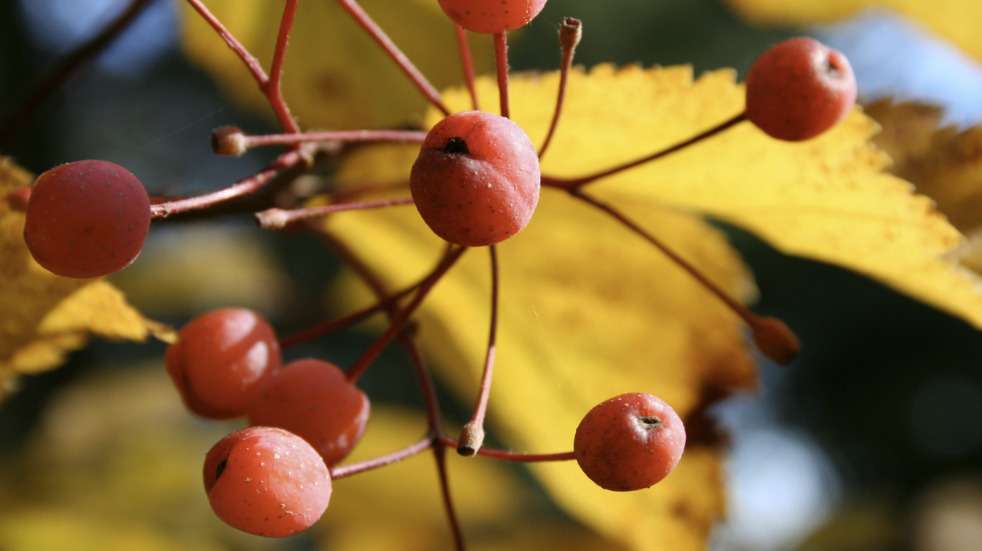 Where to find autumnal berries and leaves in England