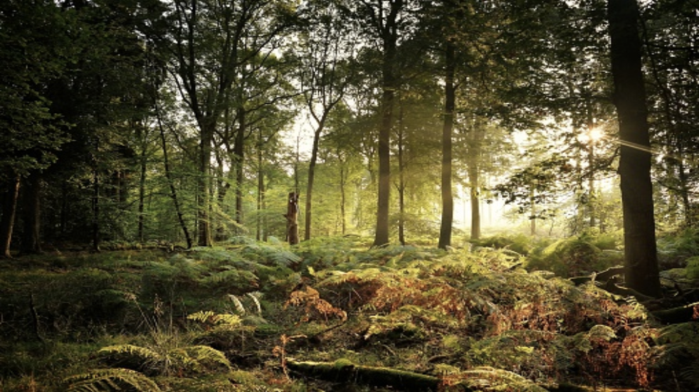 Top walks in Forest of Dean