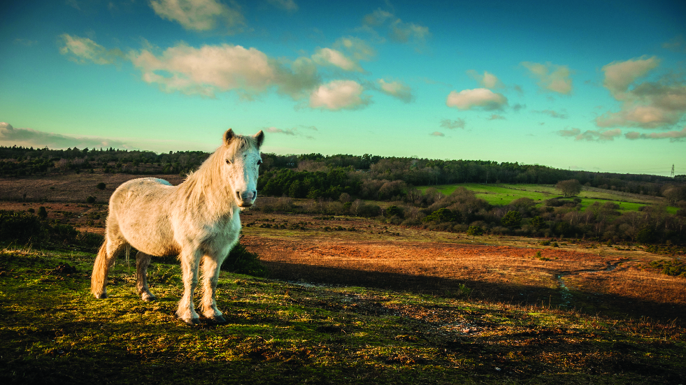 Best walks in the New Forest