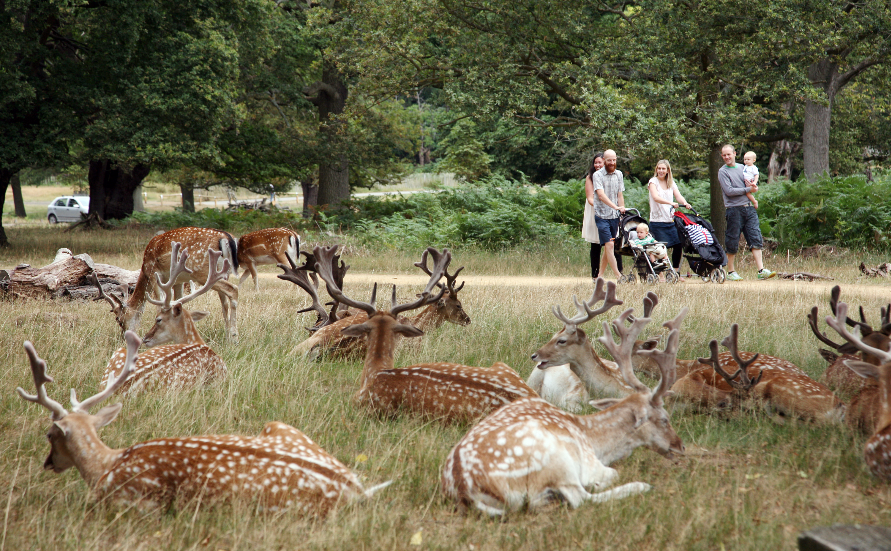 Best walks in Richmond Park