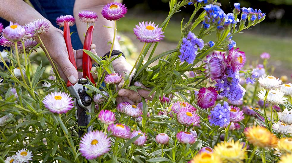 August bank holiday gardening tips pruning flowers