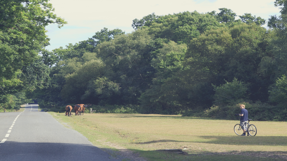 Bike ride in the New Forest