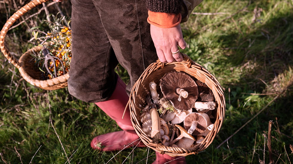 Best autumn activities: foraging for mushrooms