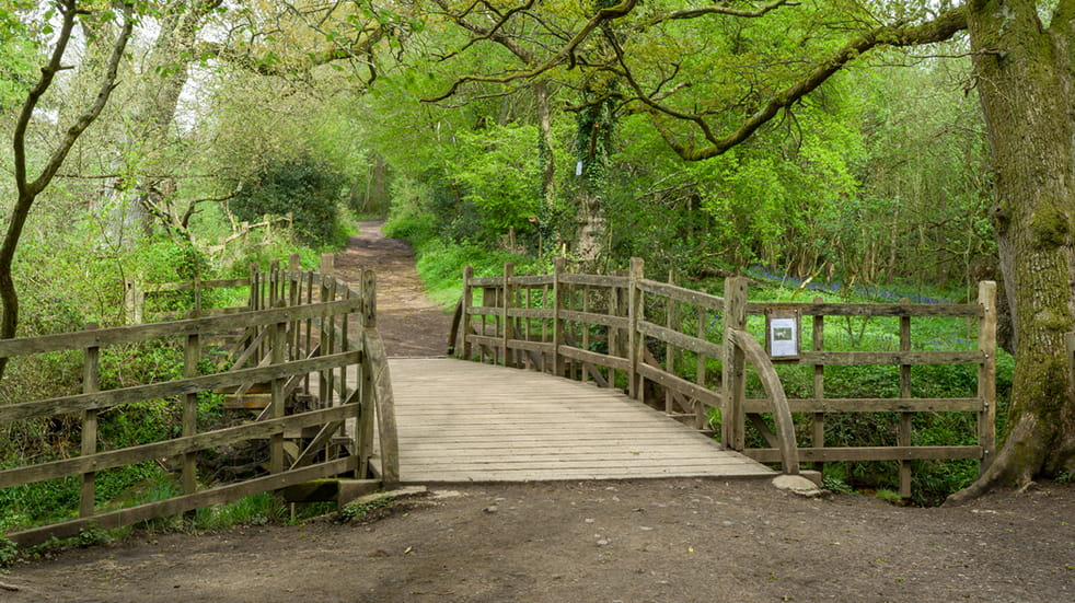 Best free days out in Sussex - Pooh Sticks in Ashdown Forest