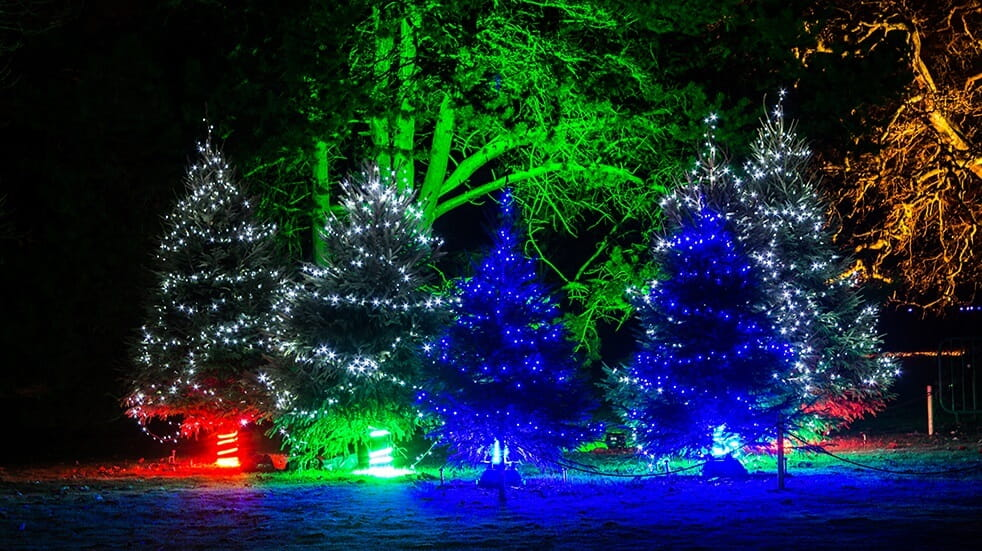 Best winter illuminations: Christmas at Kew Gardens