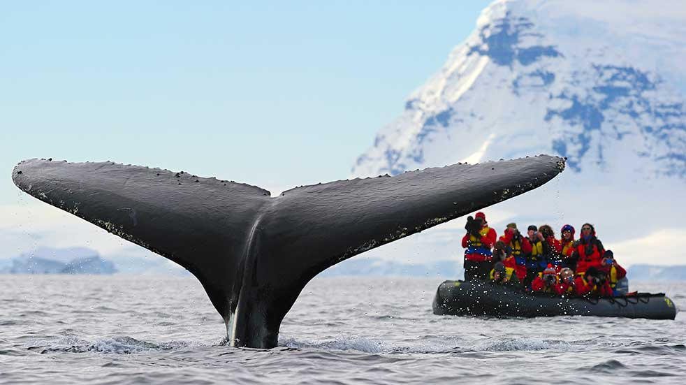 Winter experiences humpback whale
