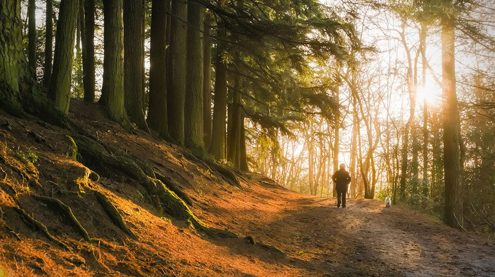 Spend time outdoors to boost your wellbeing: walking in a forest