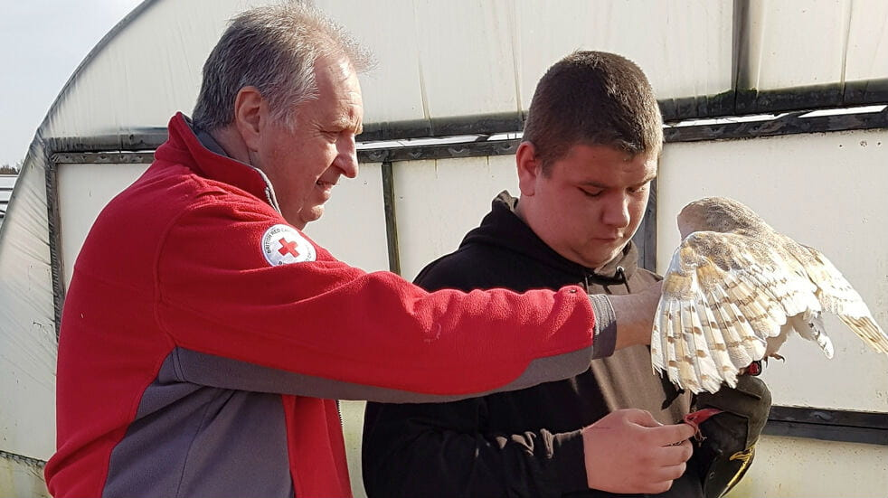 The British Red Cross providing support work at a falconry