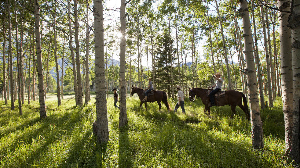 Ranch and cowboy activities in Alberta