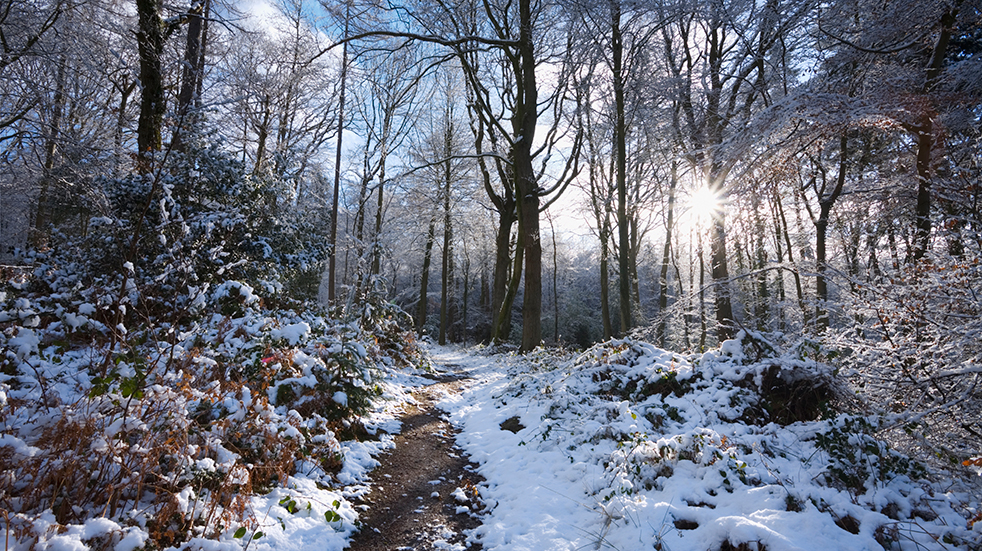 Christmas at Whitemead Forest Park: Forest of Dean in the snow