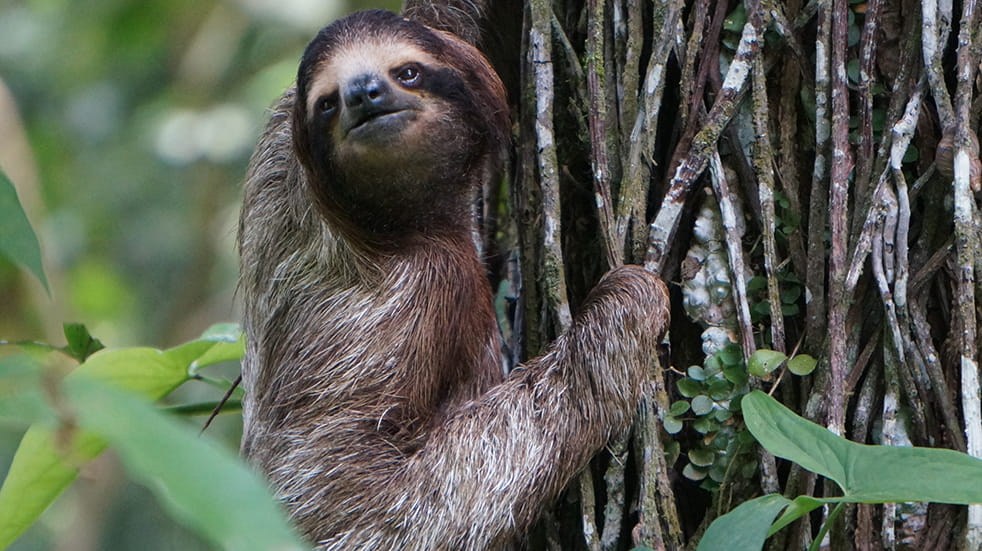 Explore Costa Rica: five unmissable experiences – sloth in rainforest