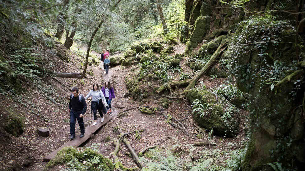 Family break in the Forest of Dean - explore Puzzlewood