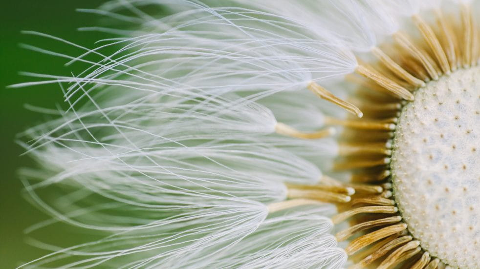 Free events March close-up of flower