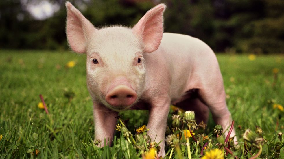 Free events March piglet