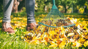 November gardening jobs raking leaves