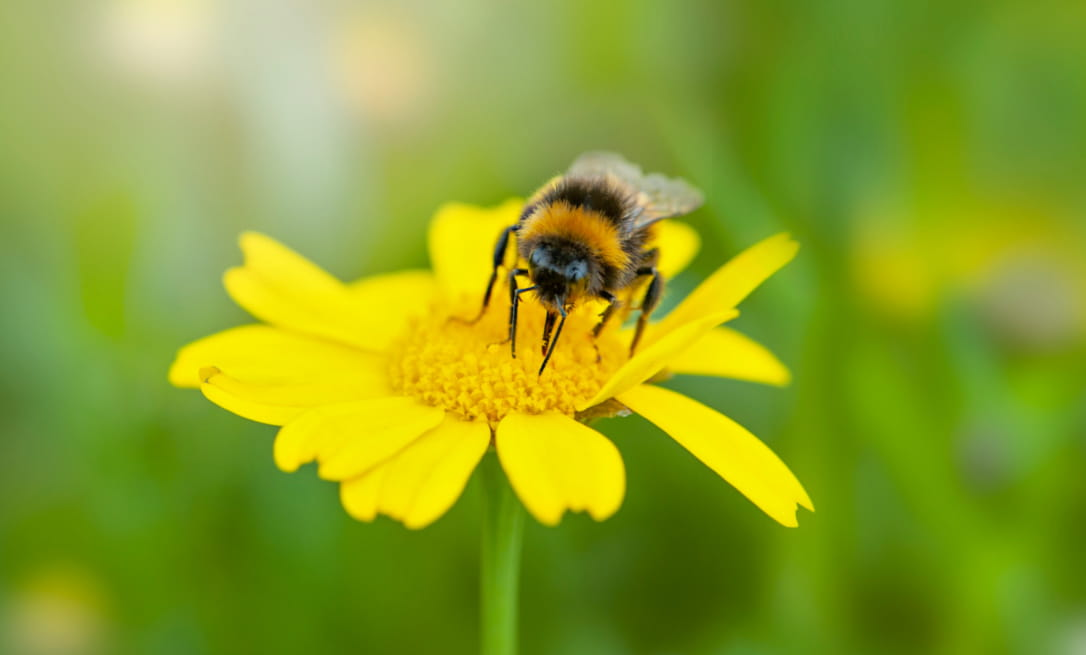 Get your garden ready for summer; bee on flower