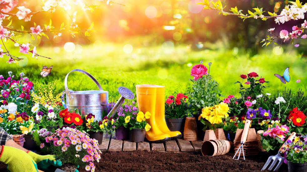 Get your garden ready for the summer flower garden