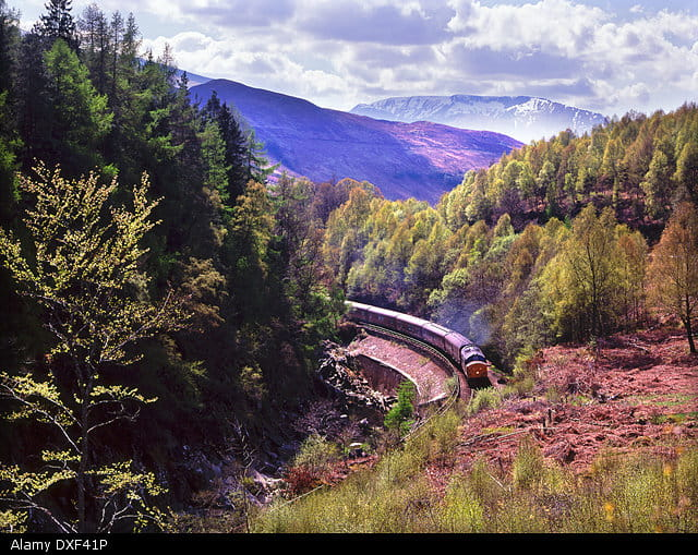 The West HIghland line cuts through ferns and purple heather with mountain views in the background