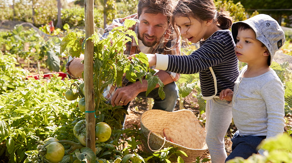 Spend time with your family for wellbeing: gardening to grow your own food