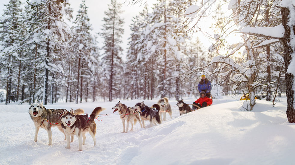 Husky sledding in Finland with Best Served Scandinavia