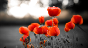 Remembrance Day 2020 how can we celebrate poppies