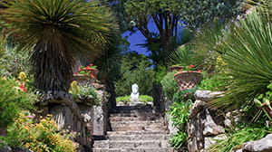 Exotic plants at Tresco Abbey Gardens in the Scilly Isles