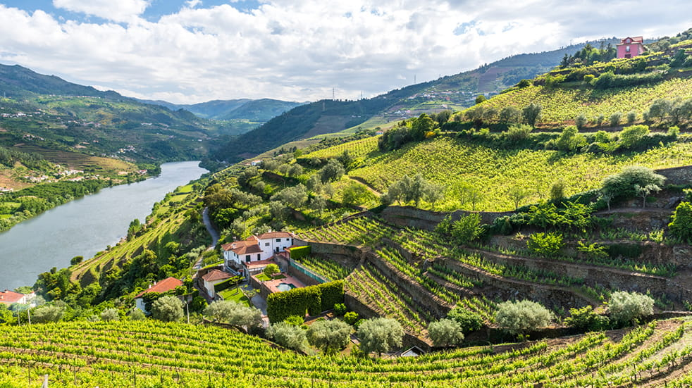 Vineyards to visit in Portugal