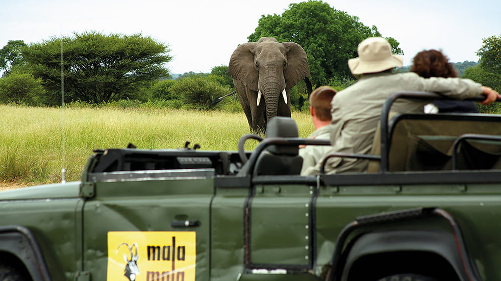 Titan Travel - escorted tour, on safari