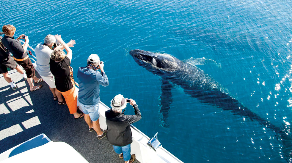 Whale watching at Fraser Island, Australia