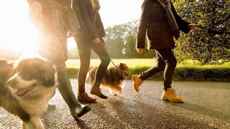 Walks near me; group with dogs