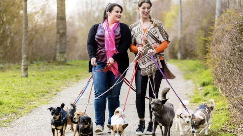 Volunteer friends walking with a dog shelter