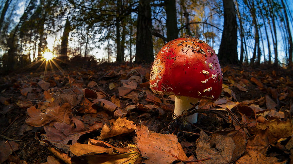 Wildlife photography tips agaric