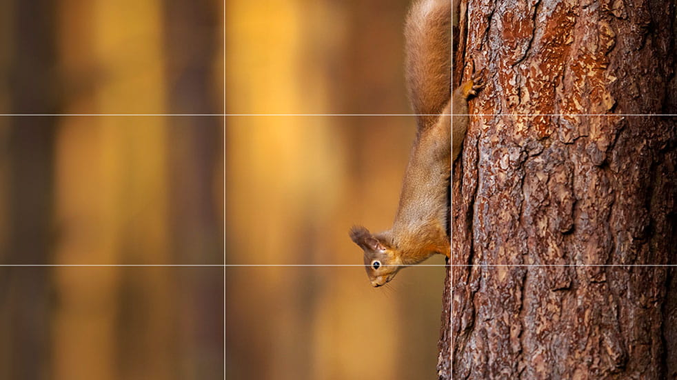 Wildlife photography tips squirrel