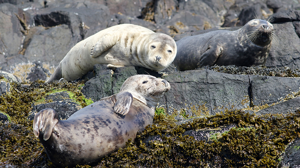 Wildlife watching in the UK: seals in the Farne Islands