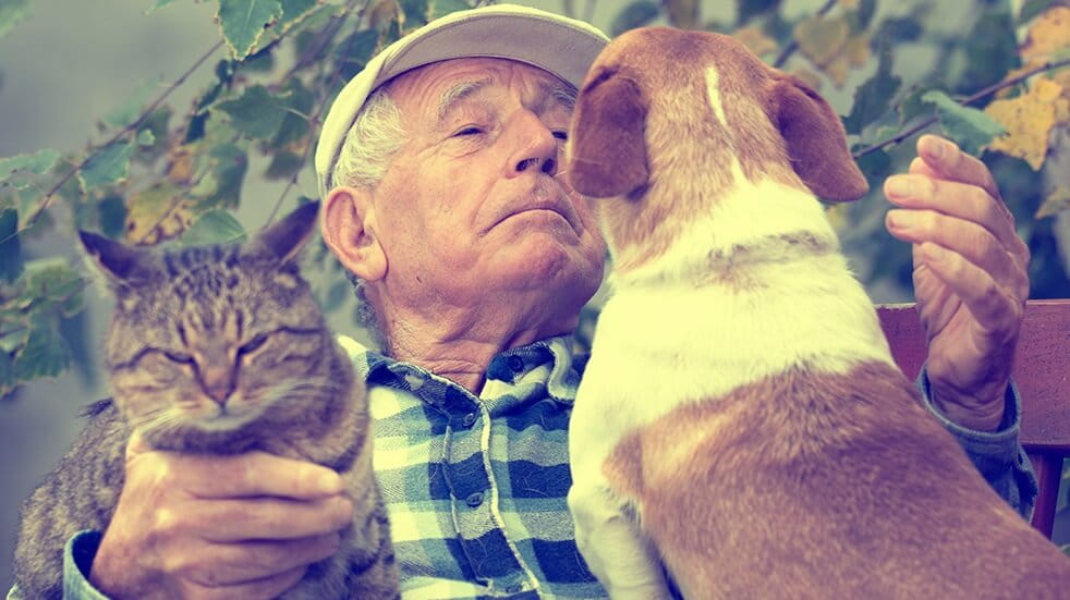 A volunteer playing with cats and dogs