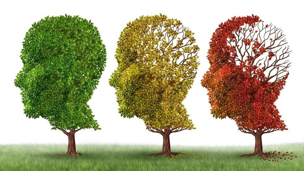 Image of 3 trees in the shape of a head. With green leaves on the left to losing leaves and brown leaves on the right depicting Alzheimers