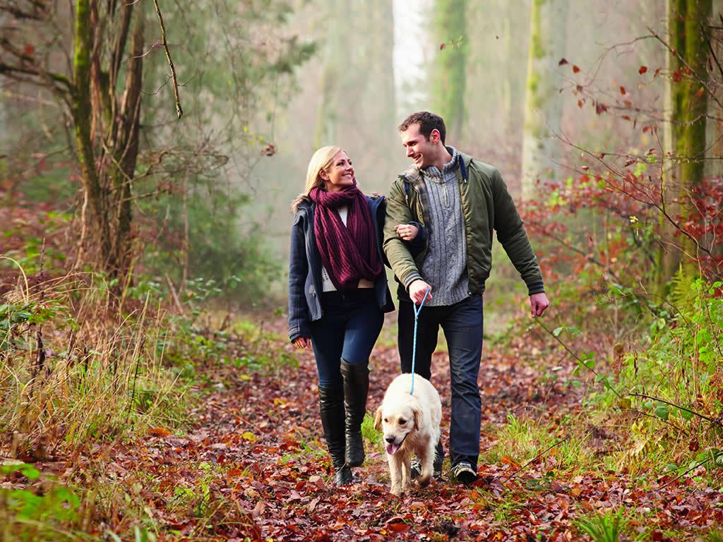 Couple with a dog walking in a forest