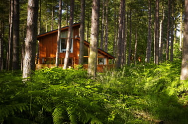 Save up to 15% off Forest Holidays
