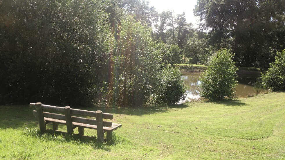 Fishing Lake Yew Tree