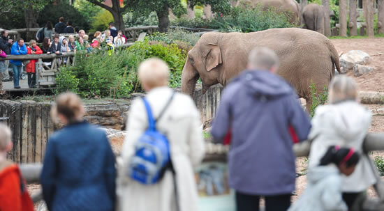 elephant with crowds