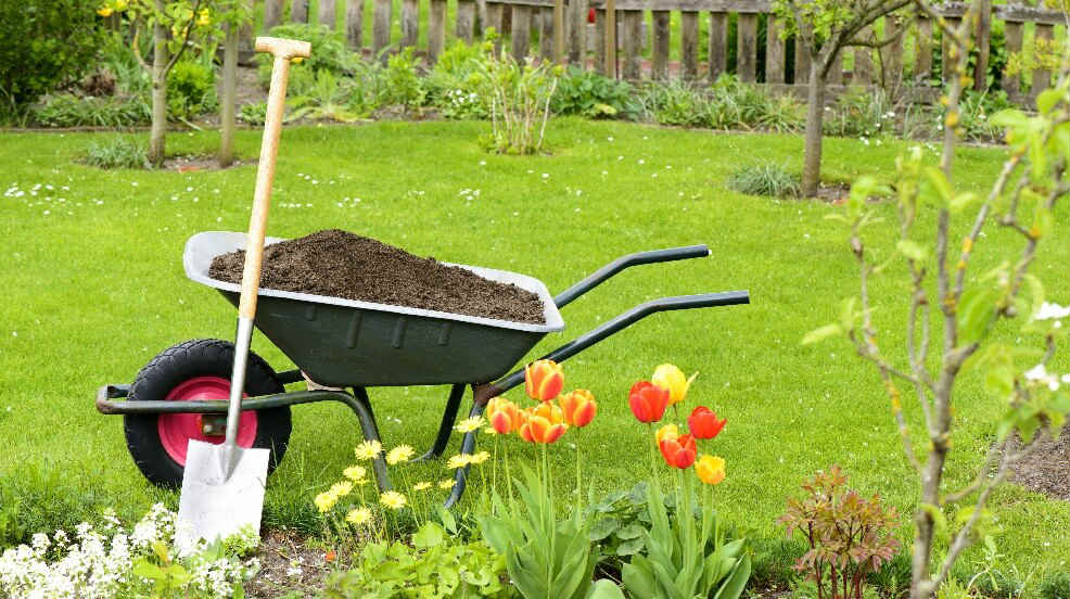 Spade and wheelbarrow in a well kept garden